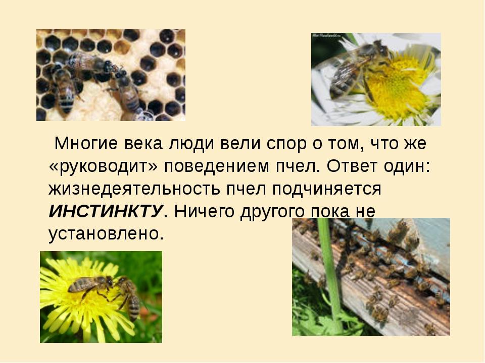 Многие века люди вели спор о том, что же «руководит» поведением пчел. Ответ...