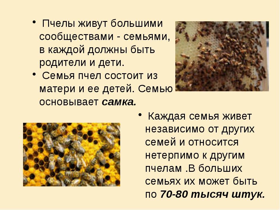 Пчелы живут большими сообществами - семьями, в каждой должны быть родители и...