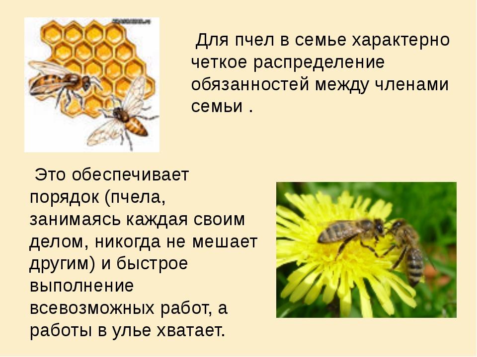 Это обеспечивает порядок (пчела, занимаясь каждая своим делом, никогда не ме...