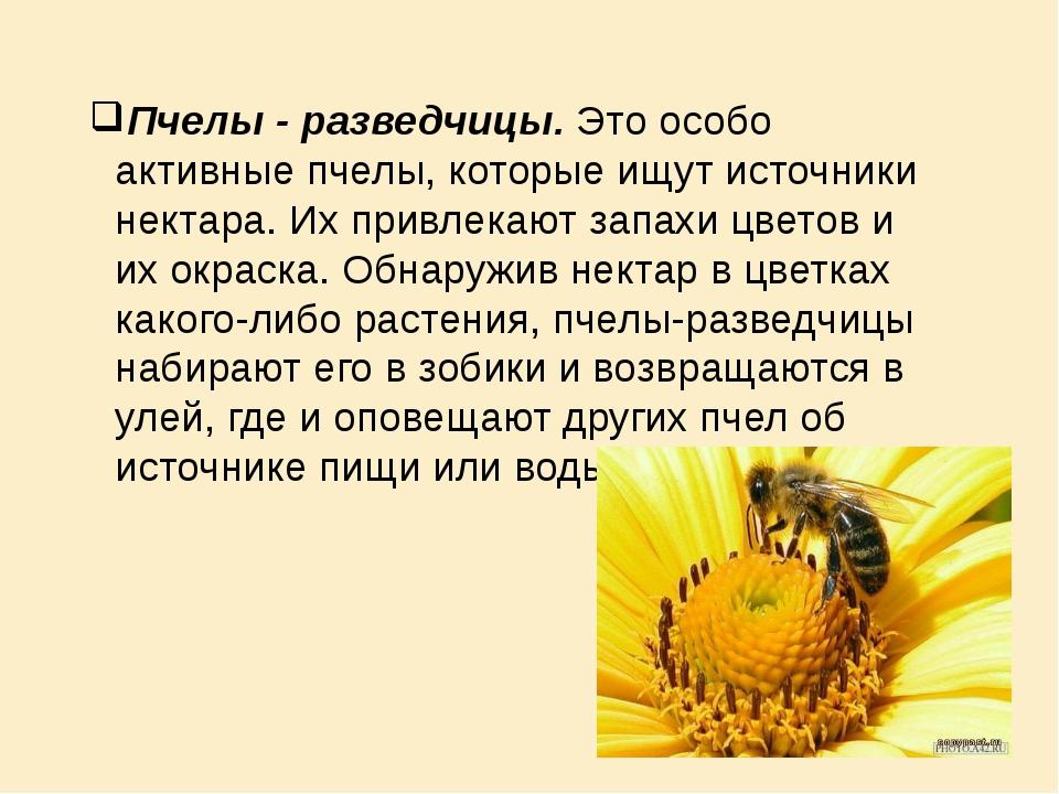 Пчелы - разведчицы. Это особо активные пчелы, которые ищут источники нектара....