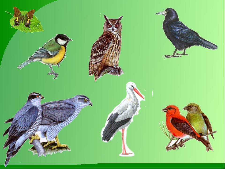 Картинки на тему птицы весной для презентации