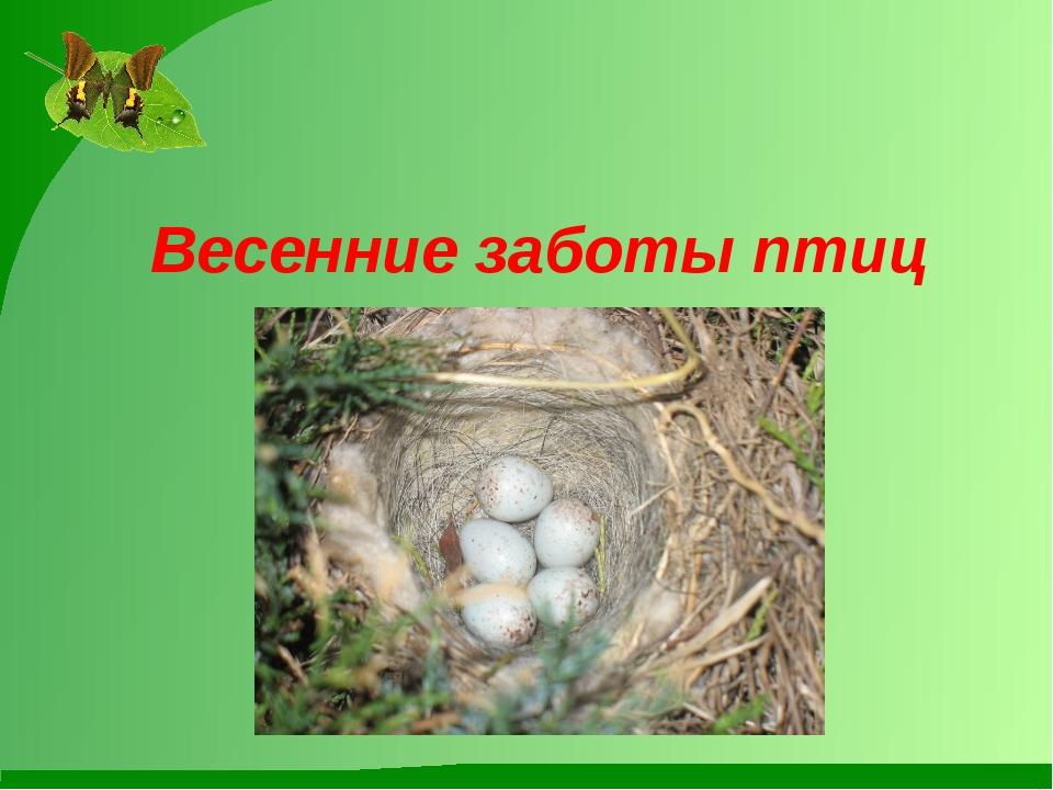 Весенние заботы птиц