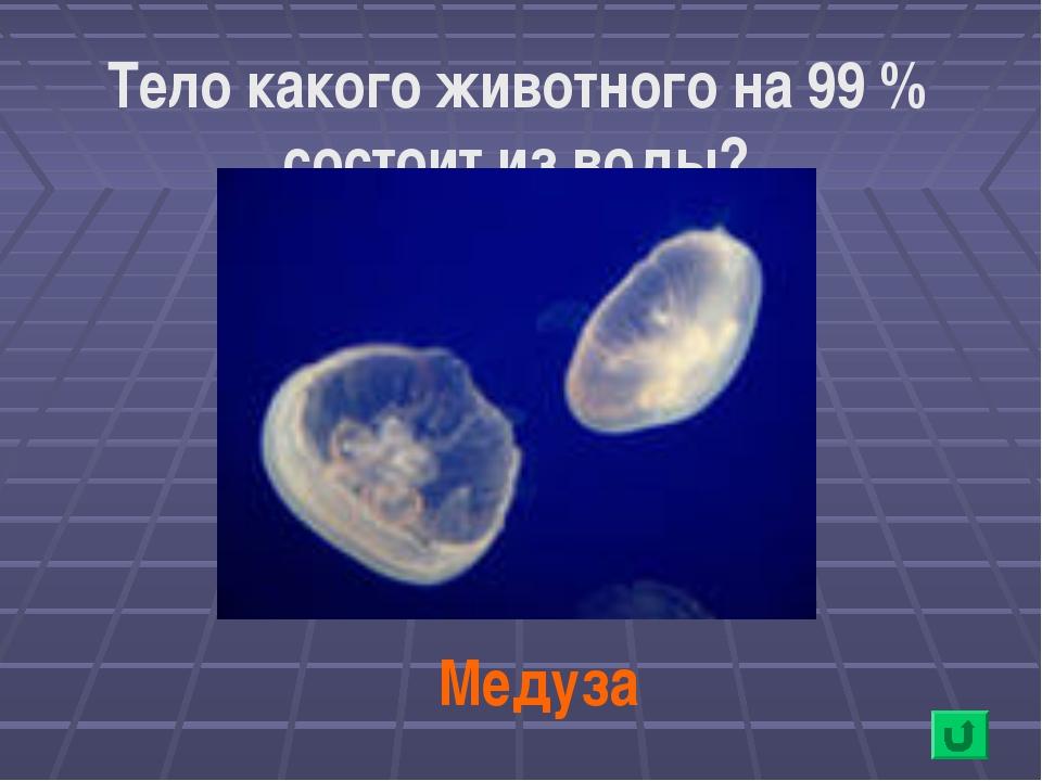 Тело какого животного на 99 % состоит из воды? Медуза