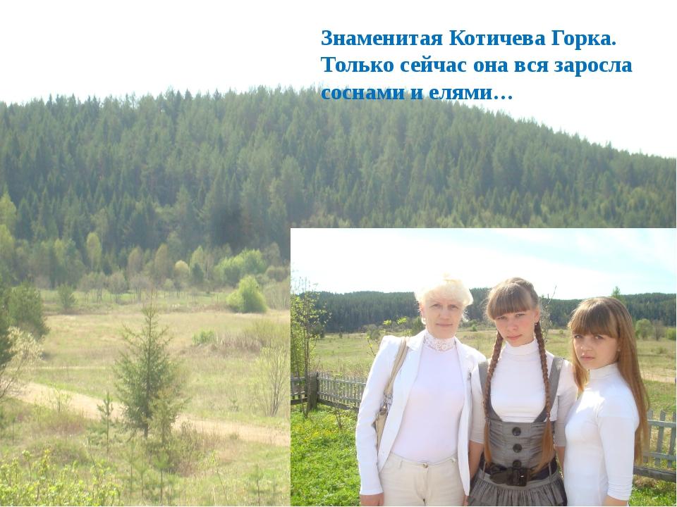 Знаменитая Котичева Горка. Только сейчас она вся заросла соснами и елями…
