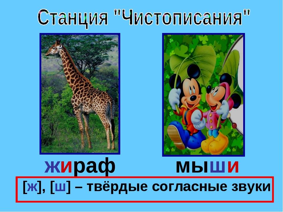 жираф мыши [ж], [ш] – твёрдые согласные звуки