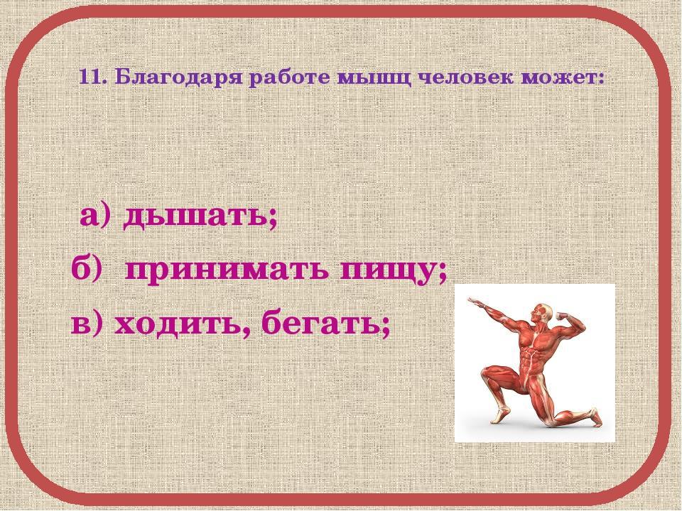 11. Благодаря работе мышц человек может: а) дышать; б) принимать пищу; в) хо...