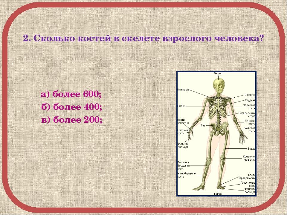 2. Сколько костей в скелете взрослого человека? а) более 600; б) более 400;...