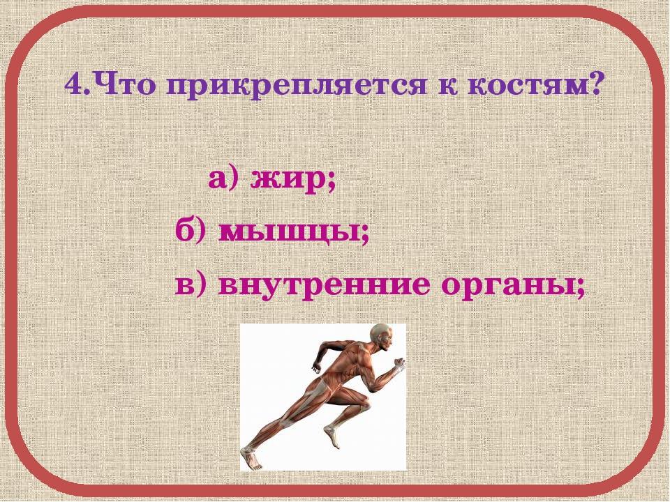 4.Что прикрепляется к костям? а) жир; б) мышцы; в) внутренние органы;