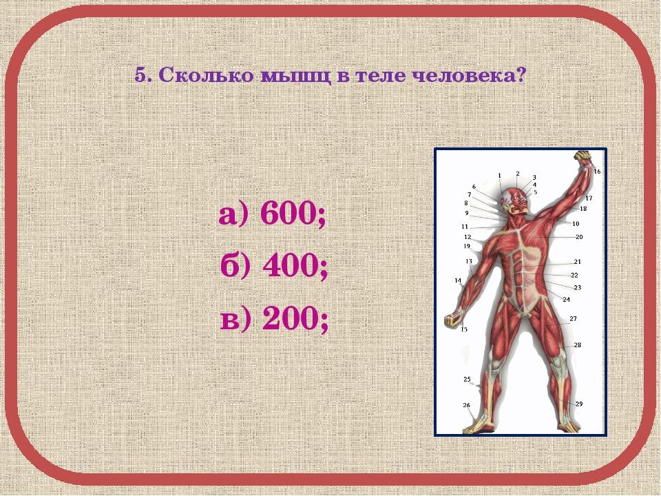 5. Сколько мышц в теле человека? а) 600; б) 400; в) 200;