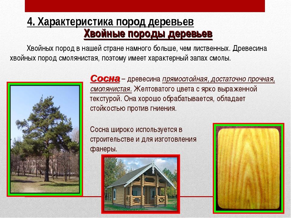 Хвойные породы деревьев Хвойных пород в нашей стране намного больше, чем лист...