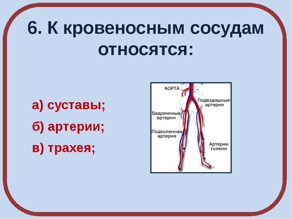 6. К кровеносным сосудам относятся: а) суставы; б) артерии; в) трахея;