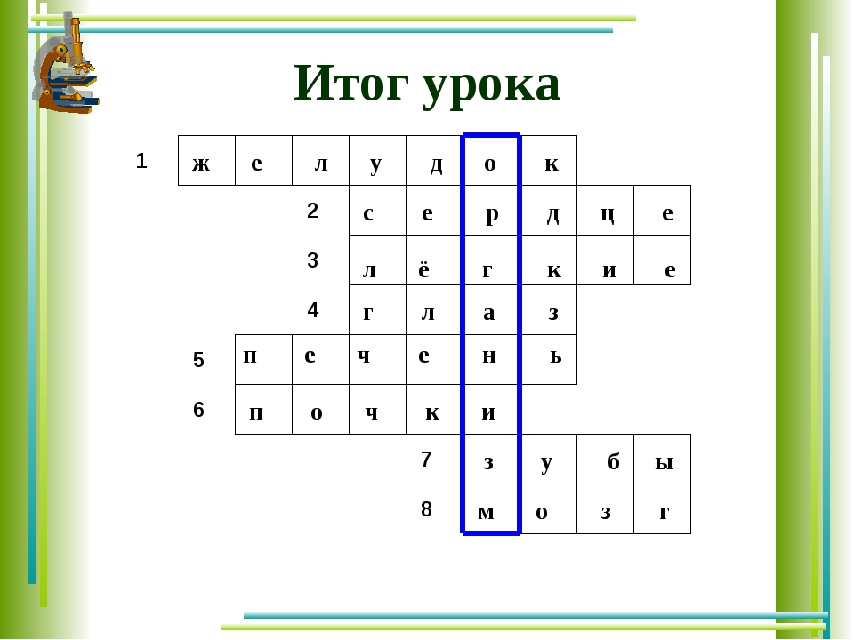 Итог урока ж е л у д о к с е р д ц е л ё г к и е г л а з п е ч е н ь п о ч к...
