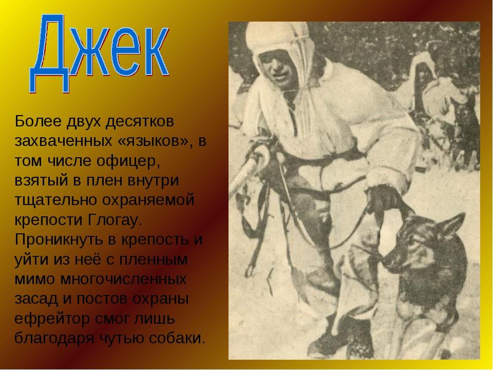 Более двух десятков захваченных «языков», в том числе офицер, взятый в плен в...