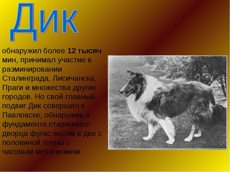 обнаружил более 12 тысяч мин, принимал участие в разминировании Сталинграда,...