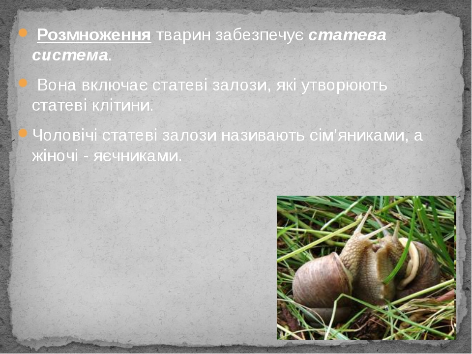 Розмноження тварин забезпечує статева система. Вона включає статеві залози,...