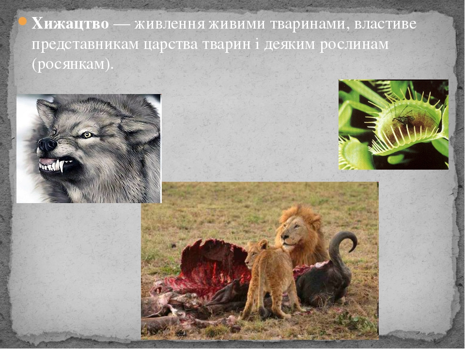 Хижацтво — живлення живими тваринами, властиве представникам царства тварин і...