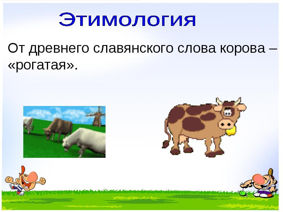 От древнего славянского слова корова – «рогатая».