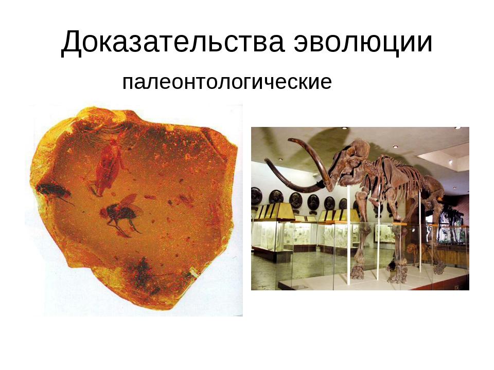Доказательства эволюции палеонтологические