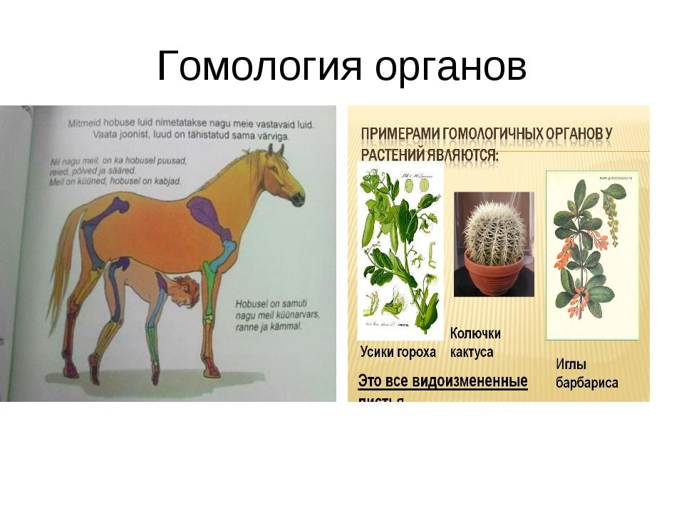 Гомология органов