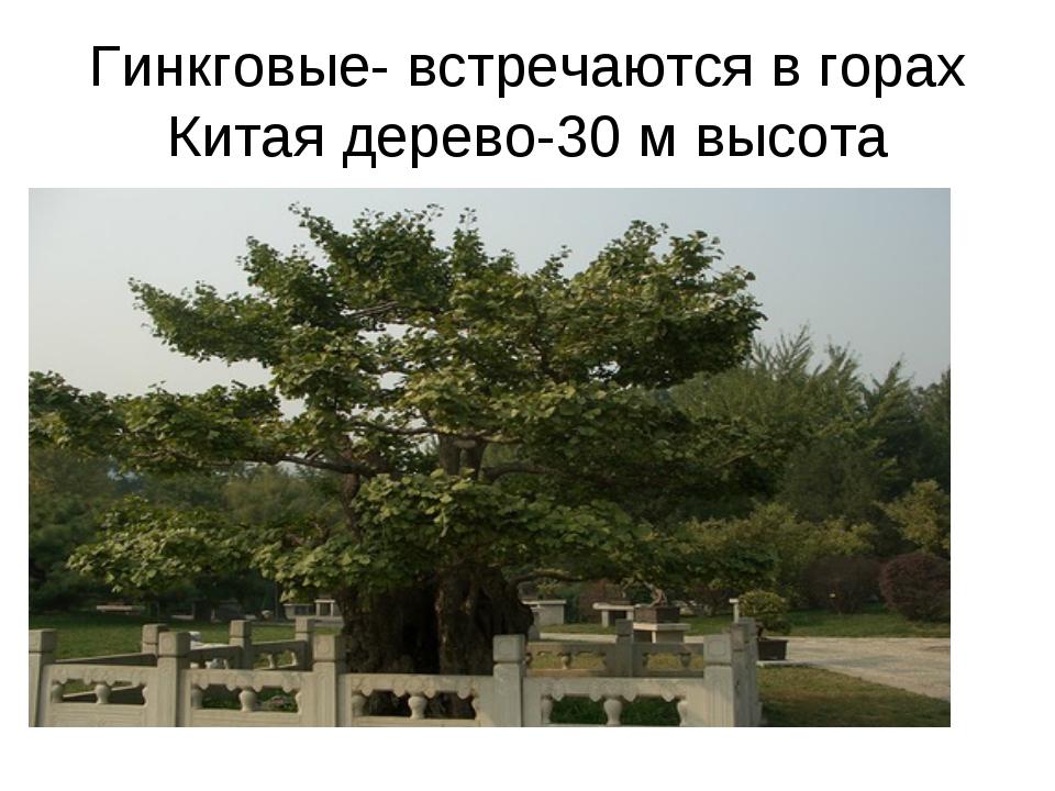 Гинкговые- встречаются в горах Китая дерево-30 м высота