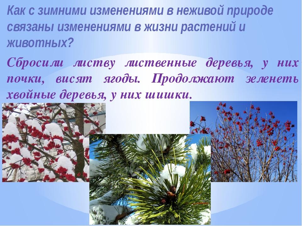Как с зимними изменениями в неживой природе связаны изменениями в жизни расте...