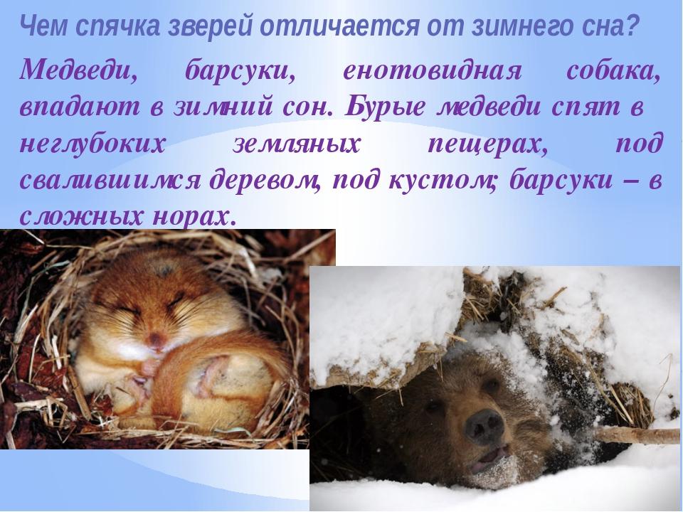 Картинки животных которые на зиму в спячке