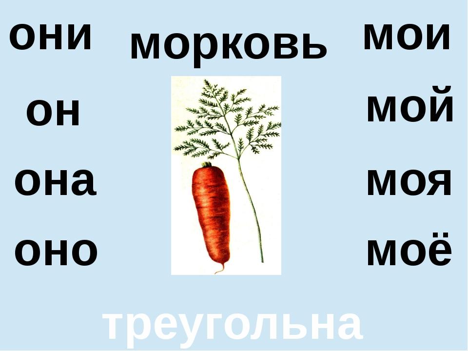 морковь треугольная он оно мой моё они мои она моя