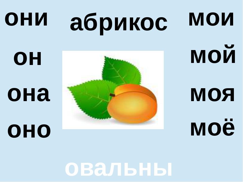абрикос овальный она оно моя моё они мои он мой