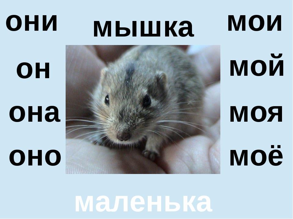 мышка маленькая он оно мой моё они мои она моя