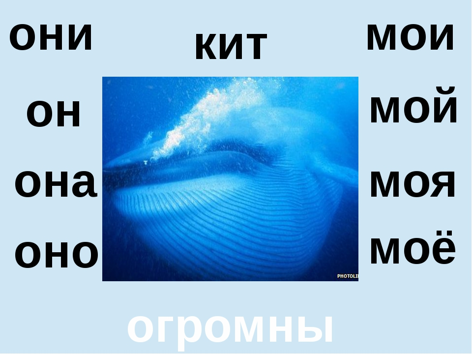 она оно моя моё кит огромный они мои он мой
