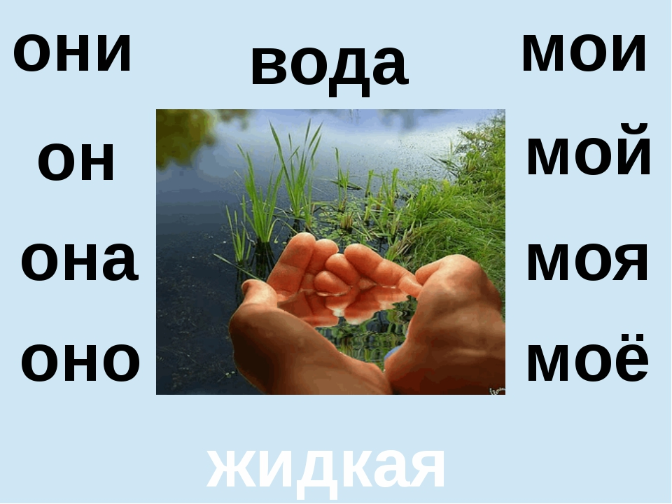 вода жидкая он оно мой моё мои они она моя