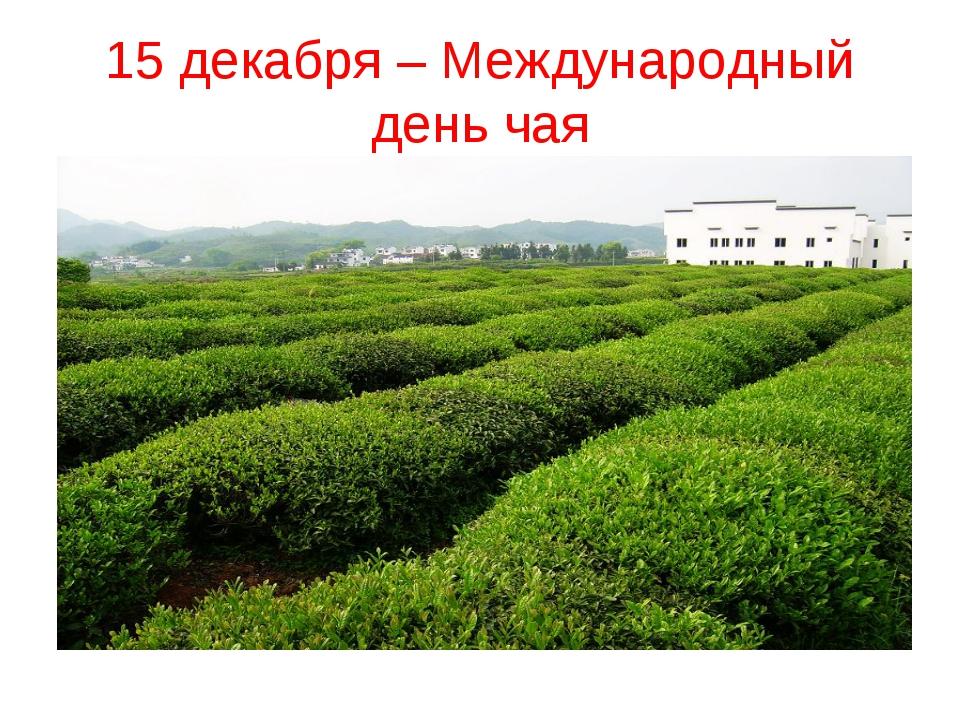 15 декабря – Международный день чая