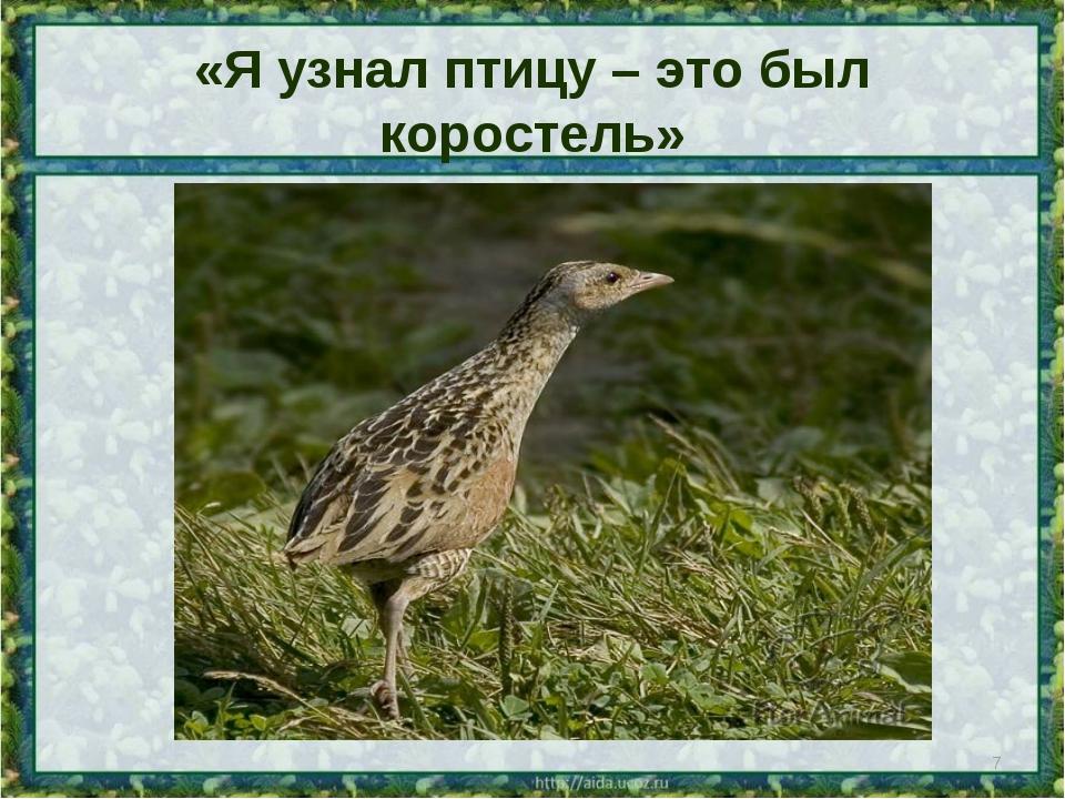 «Я узнал птицу – это был коростель» *