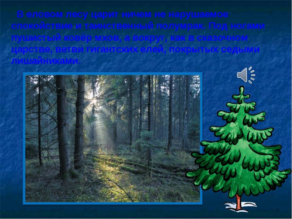 В еловом лесу царит ничем не нарушаемое спокойствие и таинственный полумрак....