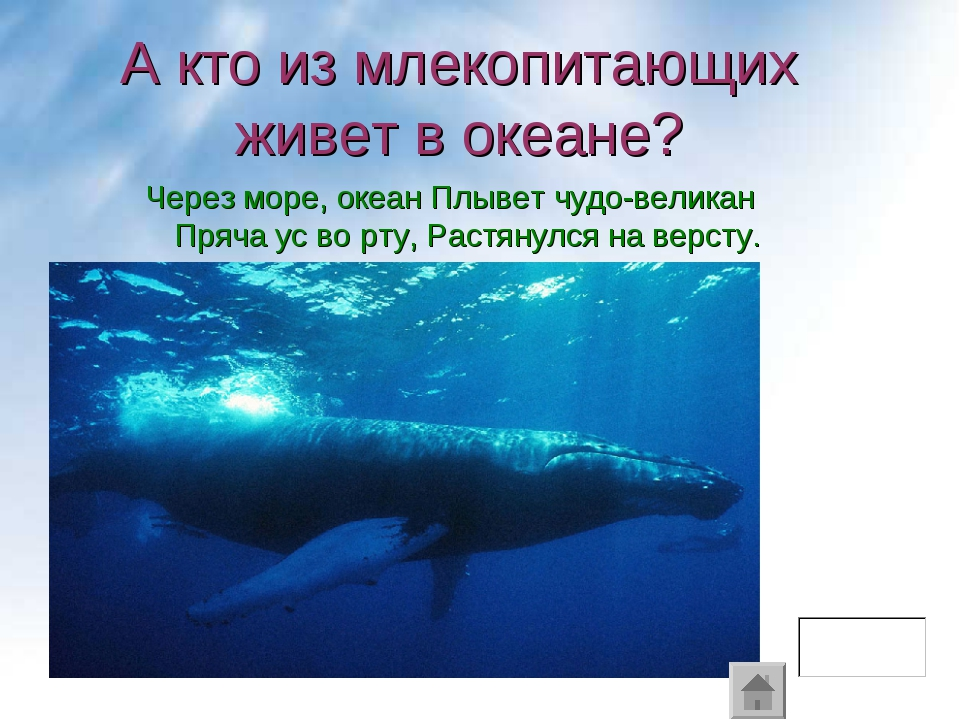 Через море, океан Плывет чудо-великан Пряча ус во рту, Растянулся на версту....