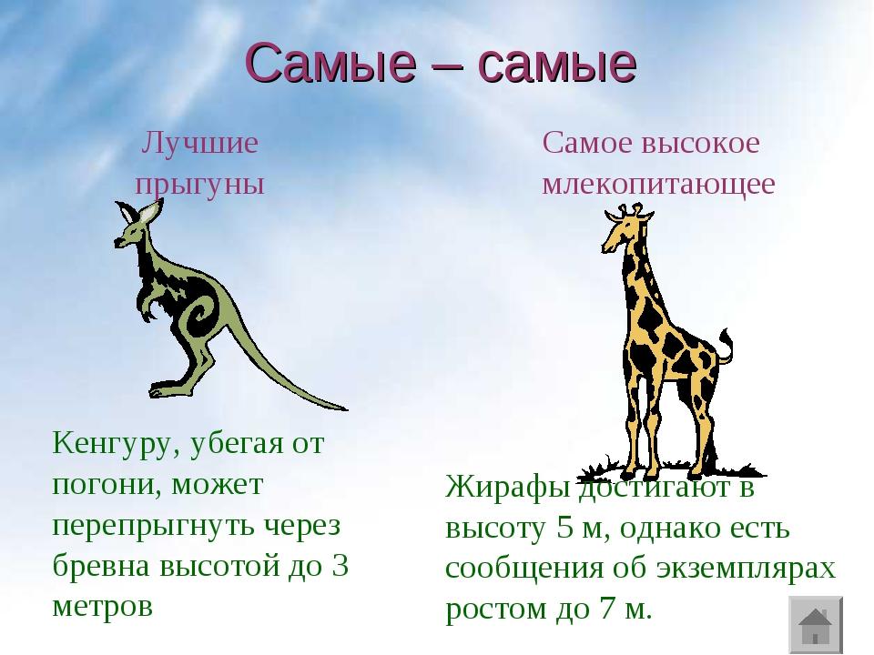 Самые – самые Кенгуру, убегая от погони, может перепрыгнуть через бревна высо...