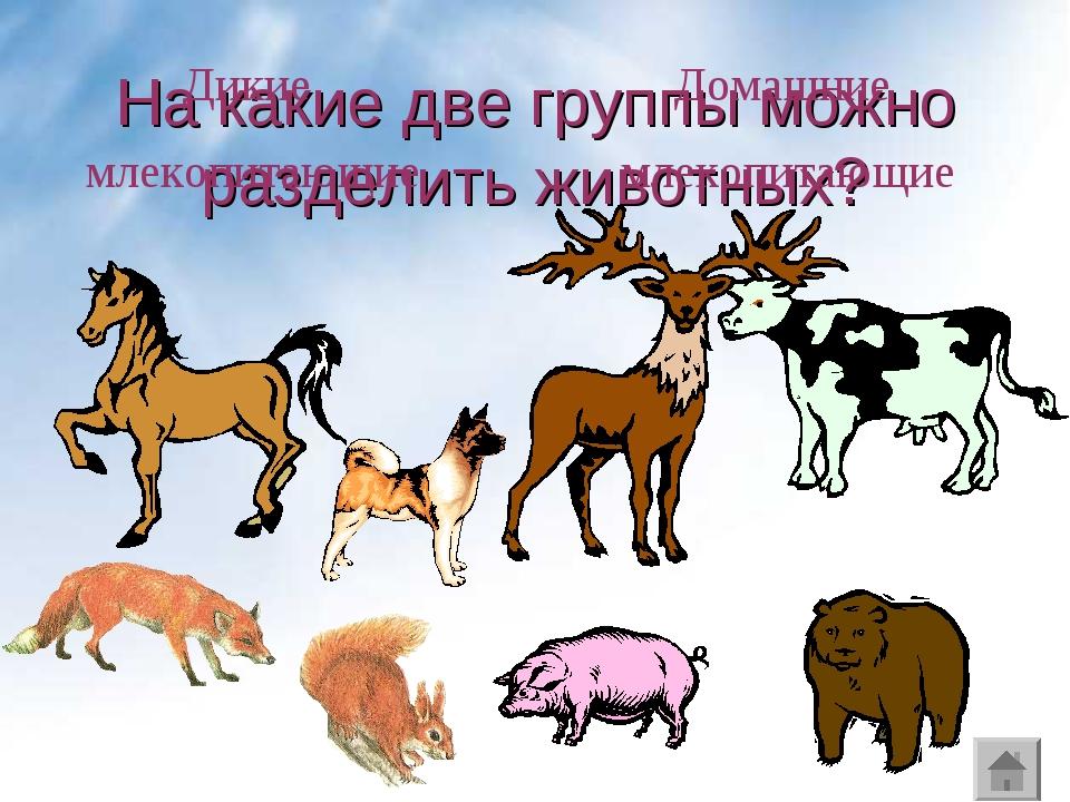 На какие две группы можно разделить животных? Дикие млекопитающие Домашние мл...