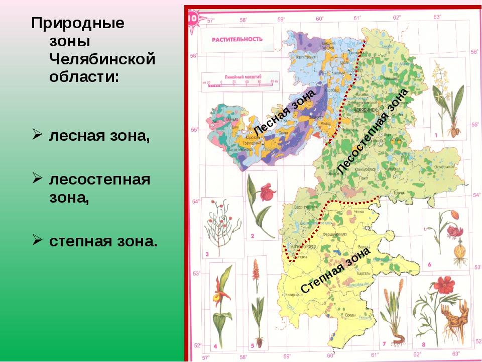 Природные зоны Челябинской области: лесная зона, лесостепная зона, степная зо...
