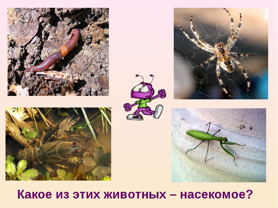 Какое из этих животных – насекомое?