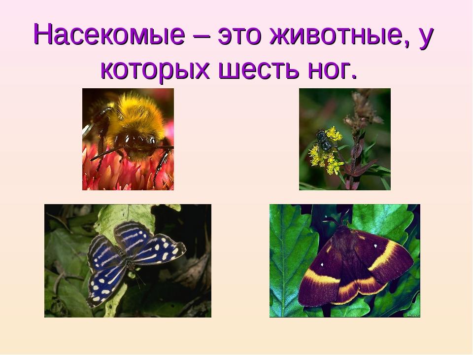 Насекомые – это животные, у которых шесть ног.