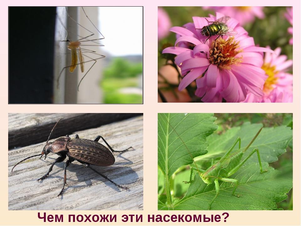 Чем похожи эти насекомые?