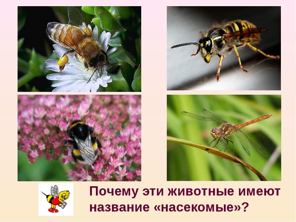 Почему эти животные имеют название «насекомые»?