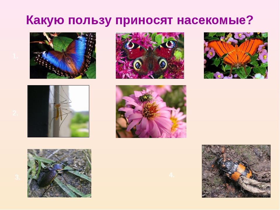Какую пользу приносят насекомые? 1. 2. 3. 4.