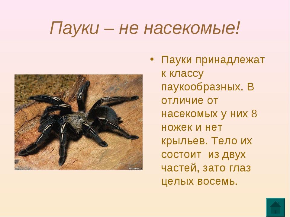 Пауки – не насекомые! Пауки принадлежат к классу паукообразных. В отличие от...