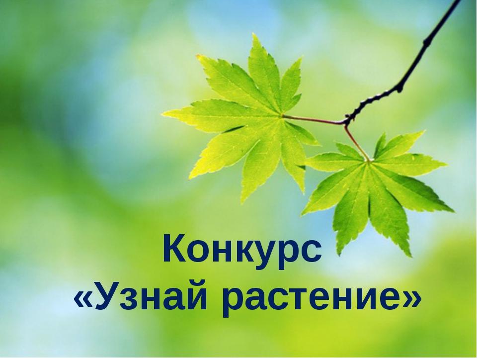 Конкурс «Узнай растение»