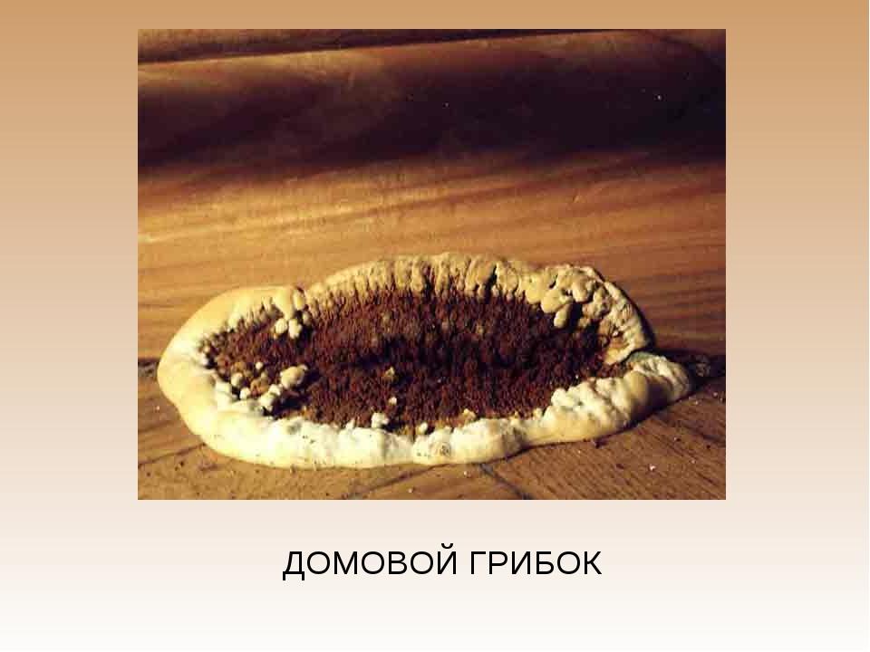 ДОМОВОЙ ГРИБОК
