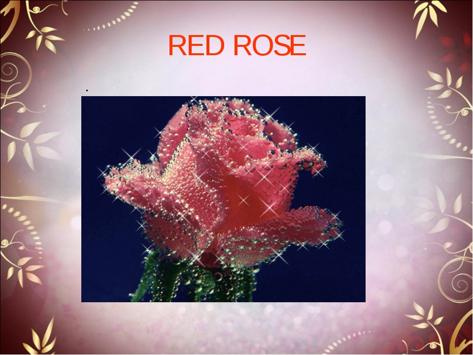 RED ROSE .