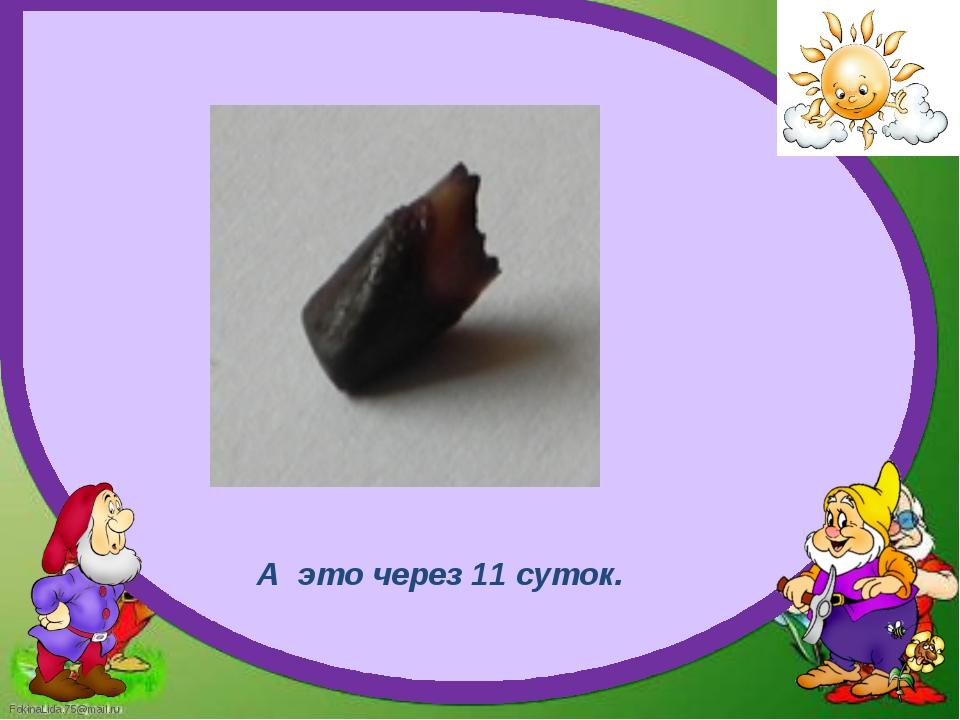 А это через 11 суток. FokinaLida.75@mail.ru