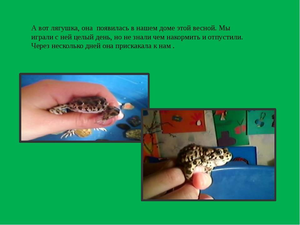 А вот лягушка, она появилась в нашем доме этой весной. Мы играли с ней целый...