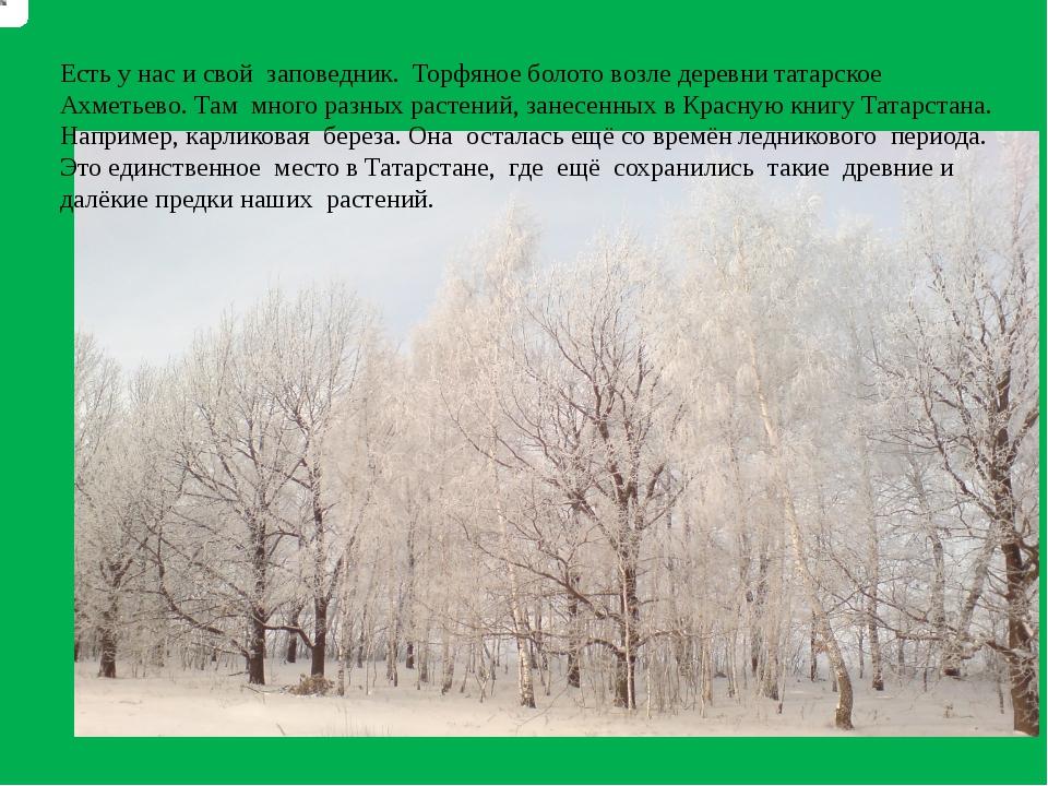 Есть у нас и свой заповедник. Торфяное болото возле деревни татарское Ахметье...